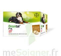 Drontal P Xl Comprimés Chien B/2 à VINEUIL