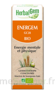 Herbalgem Energem Solution Buvable Bio Fl Cpte-gttes/30ml à VINEUIL